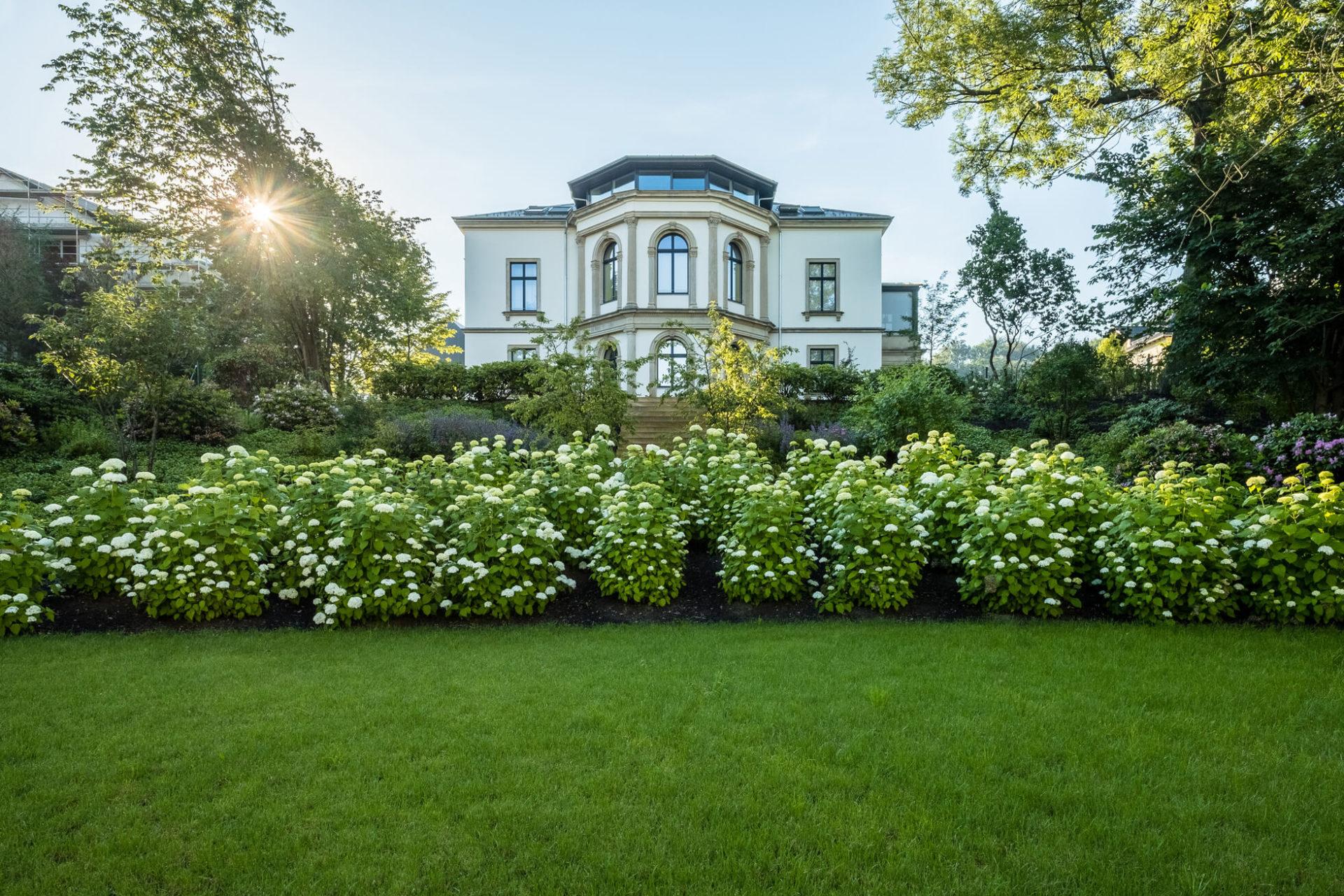 gartenmanufaktur-nuessler-garten-dresden-hortensien